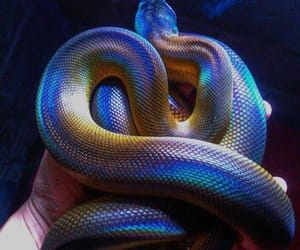 colorful, snake, and aesthetic image