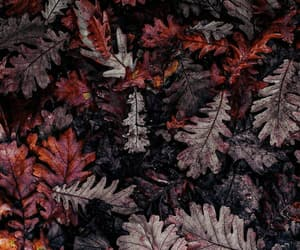 autumn, wallpaper, and leaves image