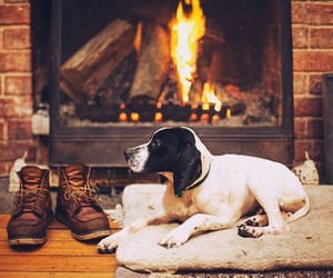 dog, fire, and winter image