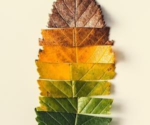 autumn, fall, and leave image