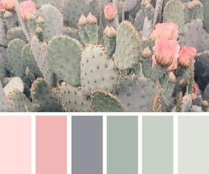 cactus, green, and inspiration image