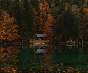 autumn, nature, and cold image