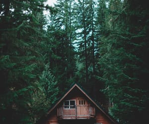 beauty, forest, and house image
