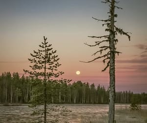 finland, finnish, and forest image