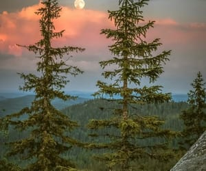 finland, finnish, and woods image