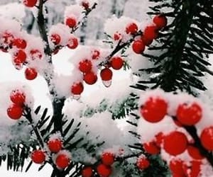 berries, snow, and winter image