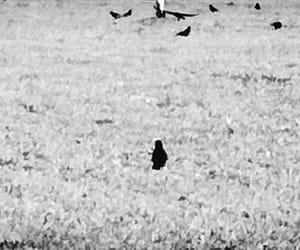 birds, black, and white image