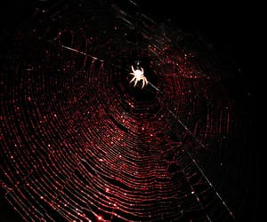 grunge, red, and spider image