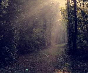 enchanted, sunbeam, and forest image