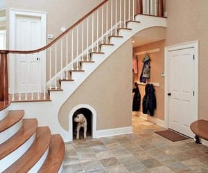 home, dog, and interior image