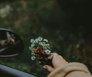 flowers, photography, and car image