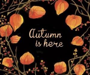 article, autumn, and autumn fashion image