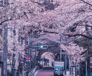 cherry blossoms, city, and fuji image