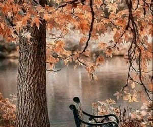 autumn, fall, and bench image