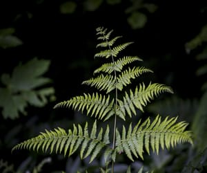 black, green, and fern image