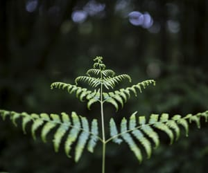 fern, nature, and plants image