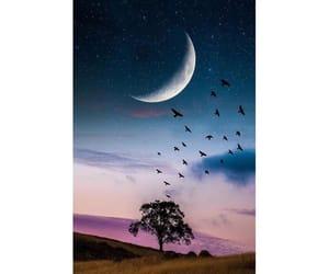 moon, night, and tree image