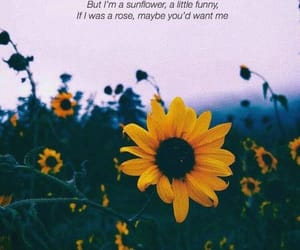 quotes, sunflower, and rose image