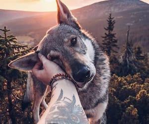 dog, wolf, and animal image