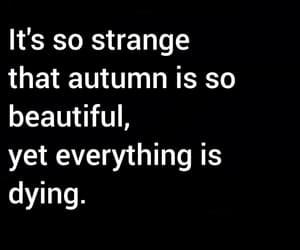 autumn, beautiful, and dark image