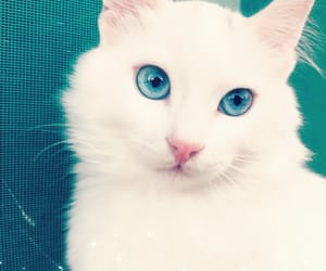 angel, blue, and cat image