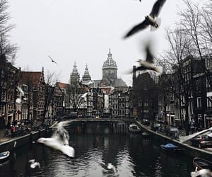 amsterdam, landscape, and photography image