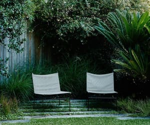 backyard, beauty, and botanical image