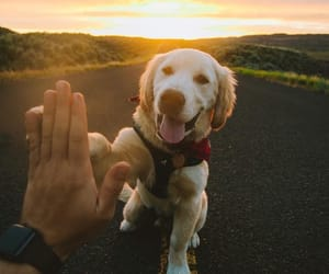 high five, friends, and puppy image