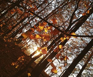 autumn, autumn forest, and nature lover image