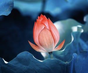 flower and landscape image