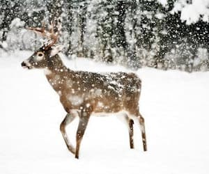 #animal #snow #magic