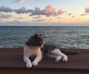 cat, animal, and sea image