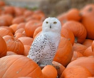 autumn, fall, and hedwig image