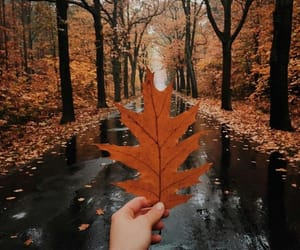 autumn, fall, and leave image