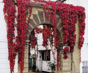architecture, florals, and indie image