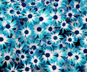 flowers, turquoise, and blue image