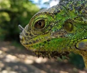 animal, biology, and lizard image