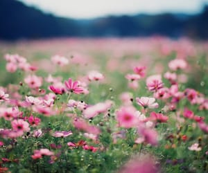 autumn, Carl Zeiss, and cosmos image
