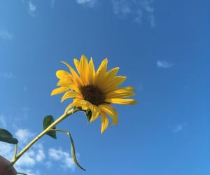 yellow, blue, and sky image