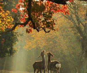 autumn and animals image