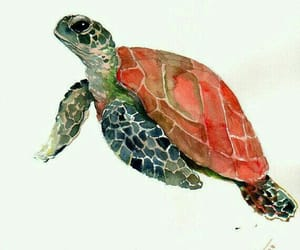 drawing and turtle image