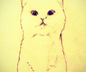 cat, kitty, and sketch image