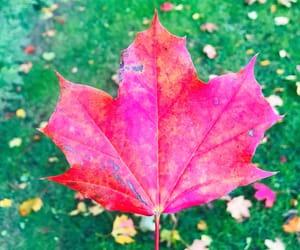 autumn, change, and swedish image