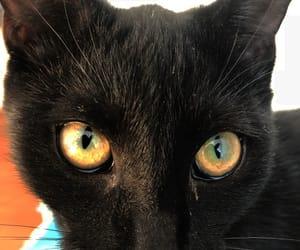 cat, eyes, and cat eyes image