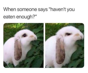 meme, funny, and bunny image