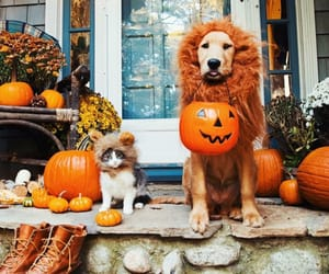 dog, Halloween, and cat image