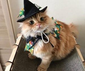 cat, animal, and Halloween image