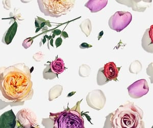 flower, wallpaper, and pink image
