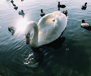 animals, beautiful, and city image
