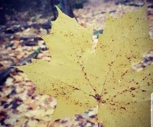 atumn, autumn, and winter image